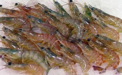基围虾的营养价值及功效都有哪些?