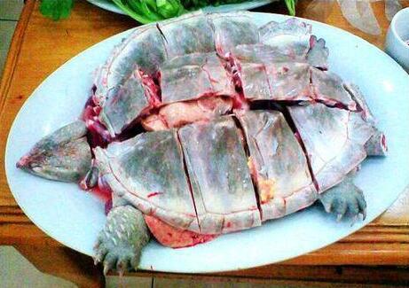 鳄龟怎么杀正确方式有哪些?