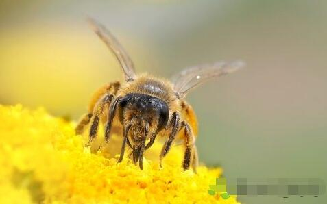 被马蜂蛰了一般怎么处理好?