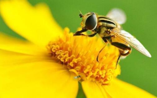 被蜜蜂蛰了要怎么处理好?
