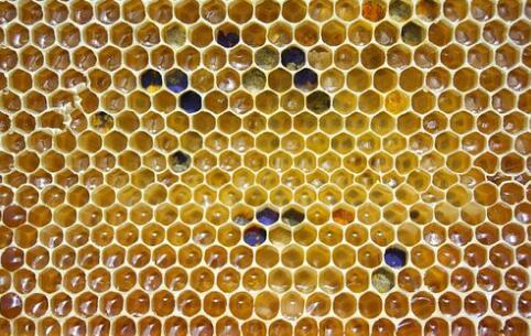 现在一箱蜜蜂要多少钱才行?