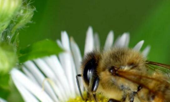 现在养殖蜜蜂一般需要具备哪些条件?