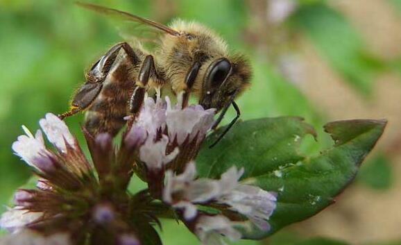 现在投资2万养蜜蜂利润一般多少?