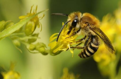 蜜蜂快速繁殖三招我再送你三招?
