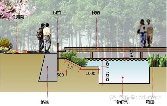 【新式】稻田养龙虾田埂设计图详细流程
