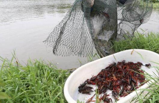 小龙虾饲料主要有哪几种模