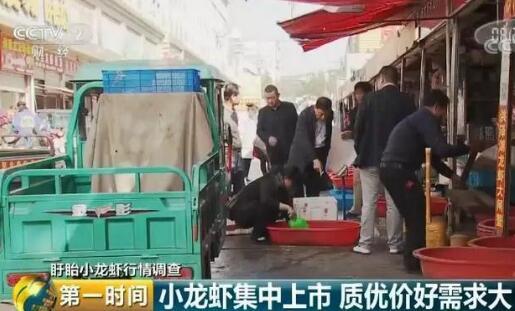 盱眙小龙虾养殖500多斤赚五、六千元这你信吗?