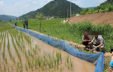 稻田养殖泥鳅怎么样有什么技术含量?