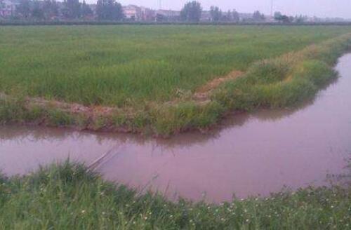 冬季稻田养殖小龙虾为什么要肥水有什么好处?
