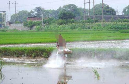 养殖小龙虾的水田有青苔怎么办用生石灰可以处理吗?