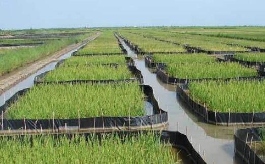 秋冬季稻田的小龙虾繁殖和虾苗培育水位要怎么控制?