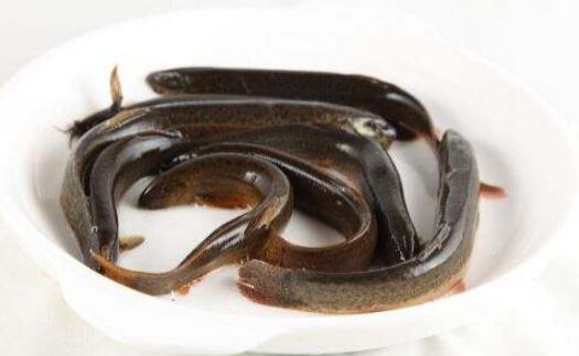 男人泥鳅怎么吃才可以壮阳补肾?