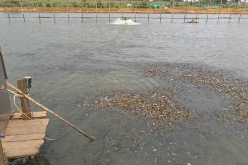 冬季台湾泥鳅要怎么养殖?