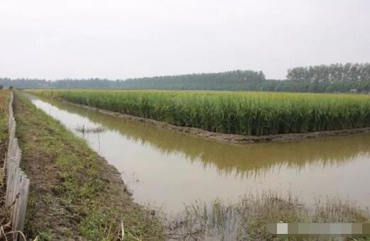 水稻田要怎么养殖小龙虾才可以高产?