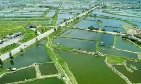 喂养小龙虾的饲料要怎么保存?