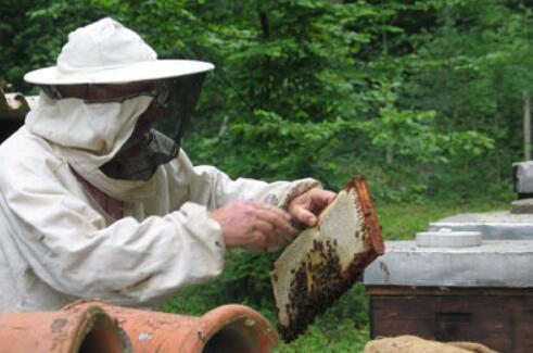 40箱蜂一年可以赚多少钱?