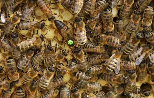 2020蜂王究竟要多少钱一只200够吗?