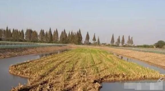 刚刚挖好的小龙虾池塘(稻田