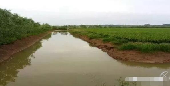 稻田或不要的鱼塘怎么改造才可以养殖小龙虾?