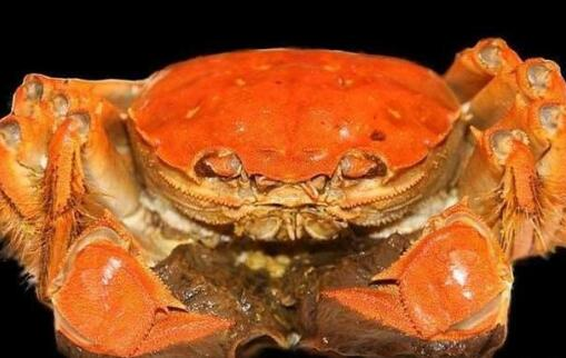 大闸蟹究竟什么季节吃比较好呢?