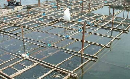 大闸蟹养殖需要什么样的生长环境?