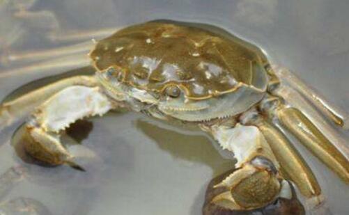 螃蟹养殖一百五十亩要多大成本?