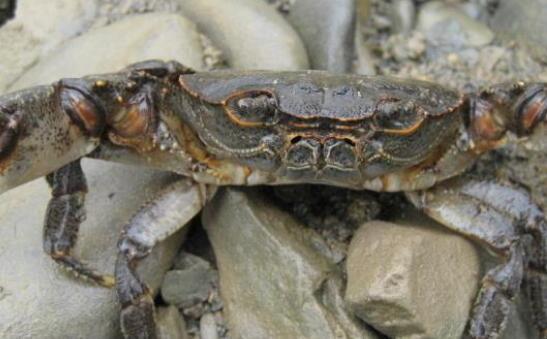 现在养螃蟹一亩究竟能赚多少钱?