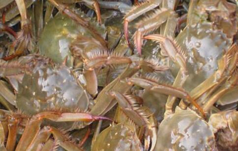 现在养螃蟹的投资与利润分别为多少?