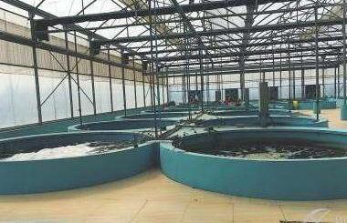 对虾封闭式工厂化循环水养殖技术有多少人知道?