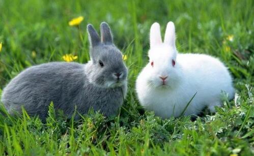 现在新手养兔应该注意什么?