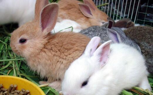 养50只母兔一年的利润有多少?
