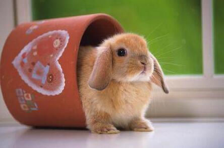 养兔子为什么不吉利有这种说法吗?