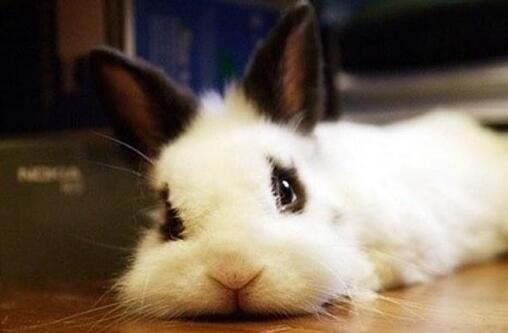 兔子窝要怎么做才行?
