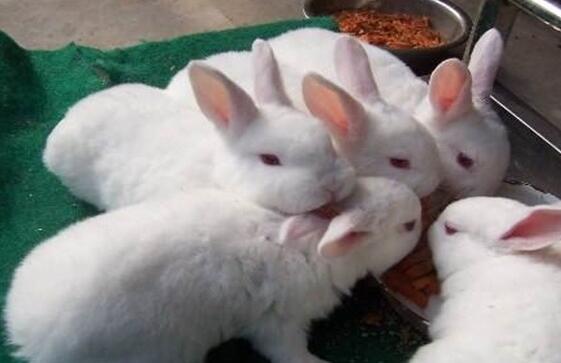 兔子喜欢人的10中表现你知道几种?