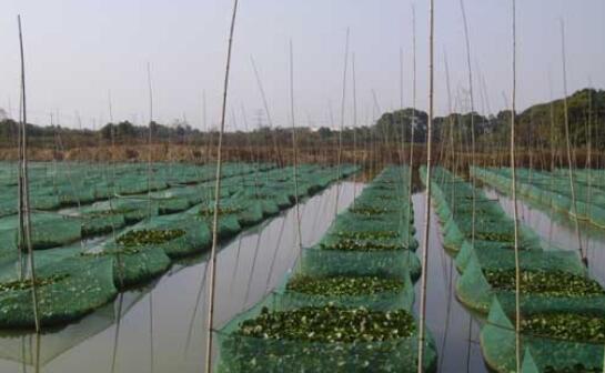 现在泥鳅养殖主要风险有哪些?