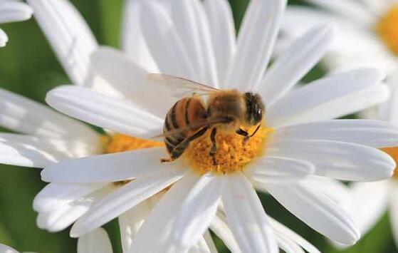 辛辛苦苦的养蜂人一年能赚多少钱?