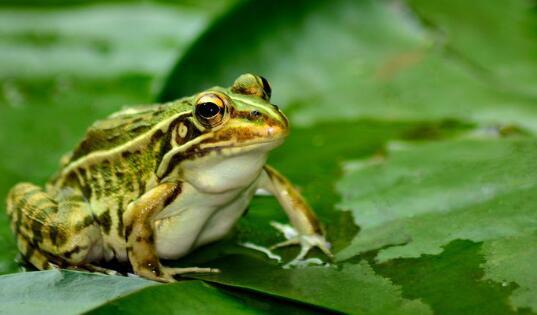 现在养青蛙3亩地要多少本钱?