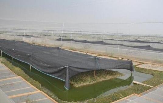 现在青蛙养殖一般需要什么手续?