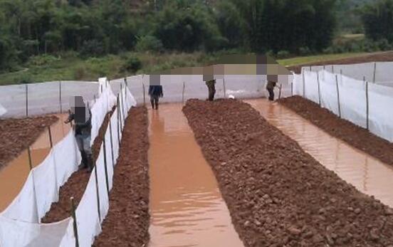 青蛙养殖技术及场地怎么建?