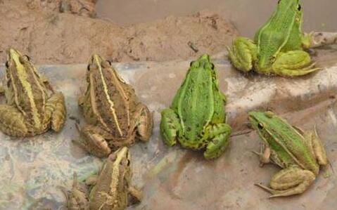 青蛙冬天需要水吗?