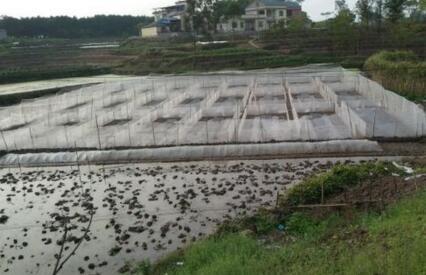 青蛙人工养殖技术都有哪些?