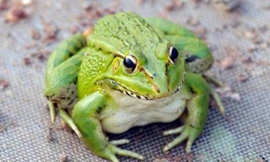养殖一亩青蛙一般需要投入多少钱?