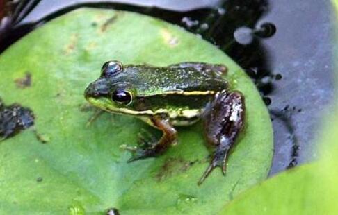 温水煮青蛙是什么意思?