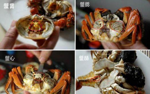螃蟹哪些部位不能吃?