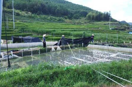 牛蛙的养殖池要怎么建造?