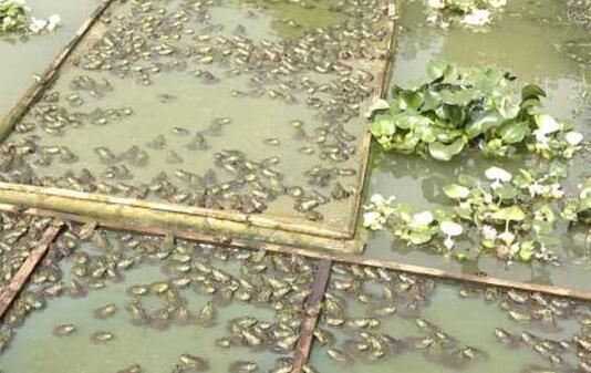 现在牛蛙养殖成本及利润分析表?