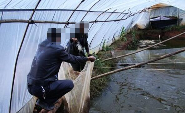 牛蛙养殖怎么安全过冬?
