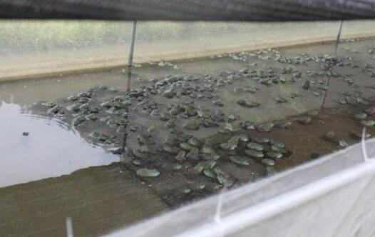 养殖牛蛙污染大吗?