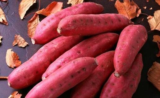 现在红薯种植的成本和利润分别有多少?
