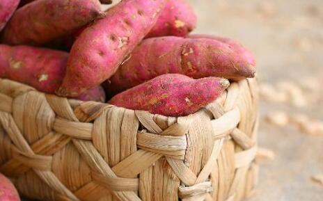 种植红薯高产的技巧有哪些?